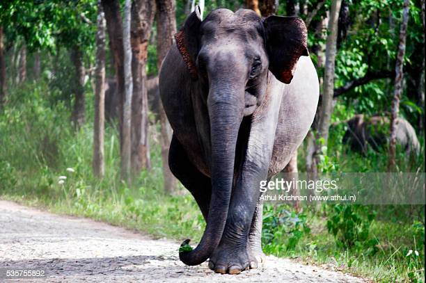 elephant charging - kerala elephants stock pictures, royalty-free photos & images