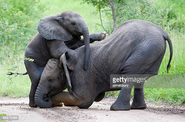 Elephant climbing frame