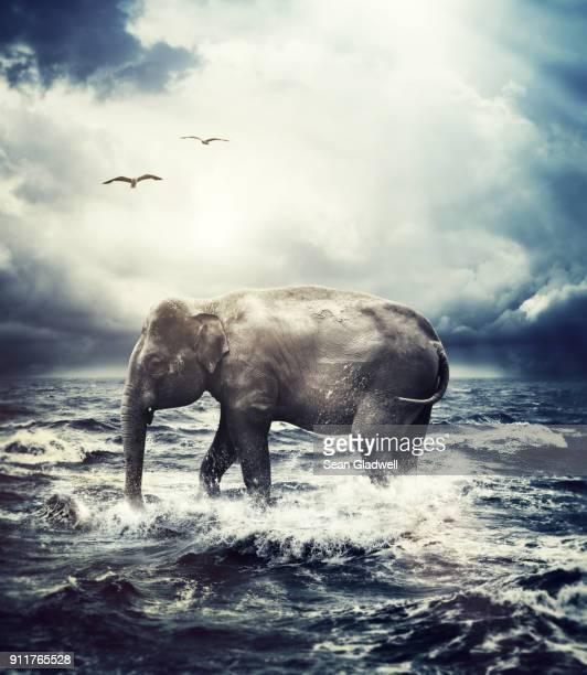 elephant crossing ocean - 海洋性の鳥 ストックフォトと画像