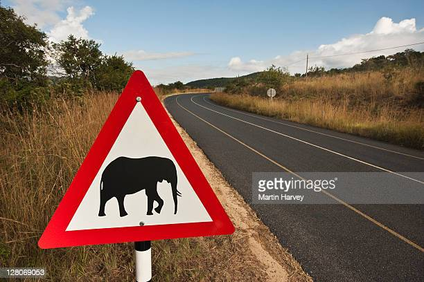 elephant crossing sign next to main road, south africa - animal crossing stock pictures, royalty-free photos & images