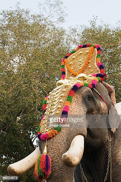 elephant dressed for hindu carnival - kerala elephants stock pictures, royalty-free photos & images