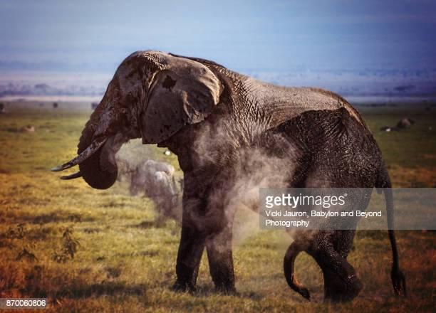 Elephant Dusting in Amboseli, Kenya