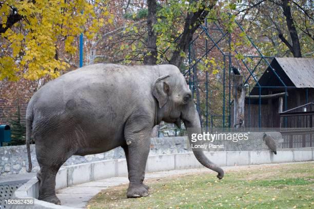 Elephant enclosure at Belgrade Zoo.
