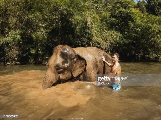 elefante que aprecia o banho de lama com turista - reserva animal - fotografias e filmes do acervo