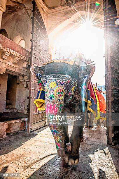 Elephant entering Amber Fort with tourist