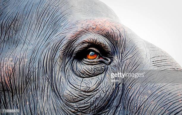 elephant eye - animal eye stock pictures, royalty-free photos & images