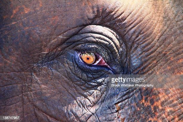 elephant eye - kerala elephants stock pictures, royalty-free photos & images
