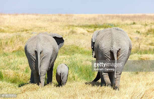 elephant family and baby walking across africa's serengeti savanna - animal family stock pictures, royalty-free photos & images