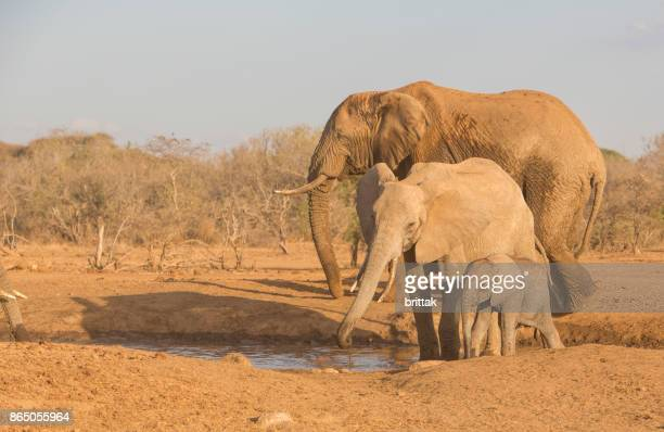 Elephant family in selekay Conaervancy, iAmboseli.