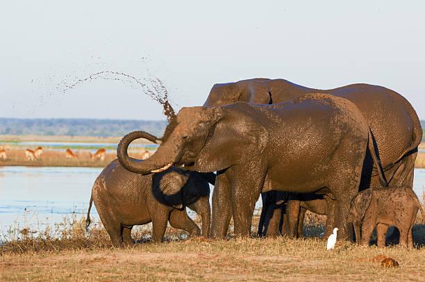 Elephant Family Wall Art