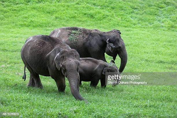elephant family - kerala elephants stock pictures, royalty-free photos & images