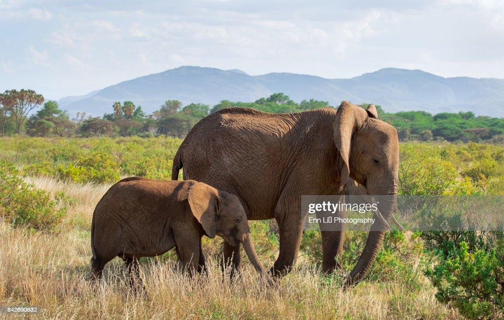 Elephant family : Stock Photo