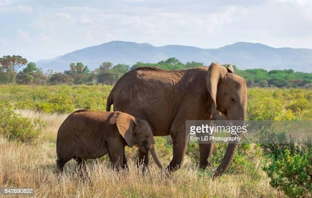 elephant family - großwild stock-fotos und bilder