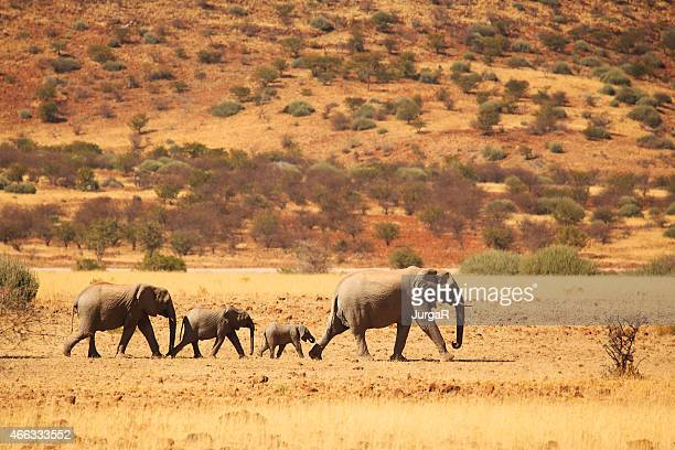 Elephant Family Walking in Namibian Desert