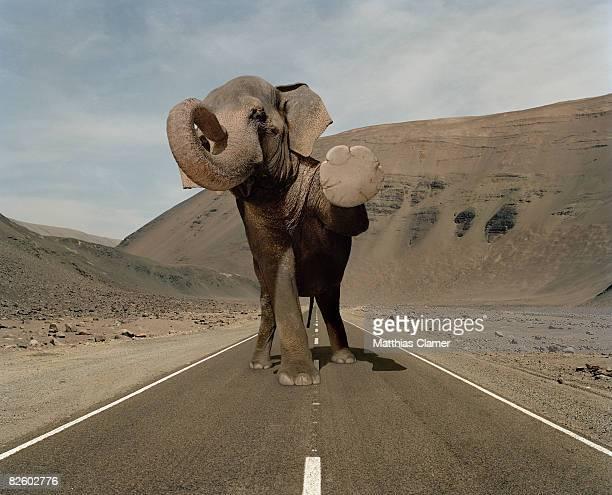 Elephant halts traffic in a desert road