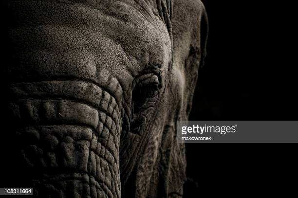 elephant head in black and white - elephant face stock photos and pictures