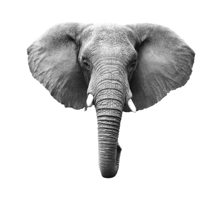 Elephant Head Isolated 178422121