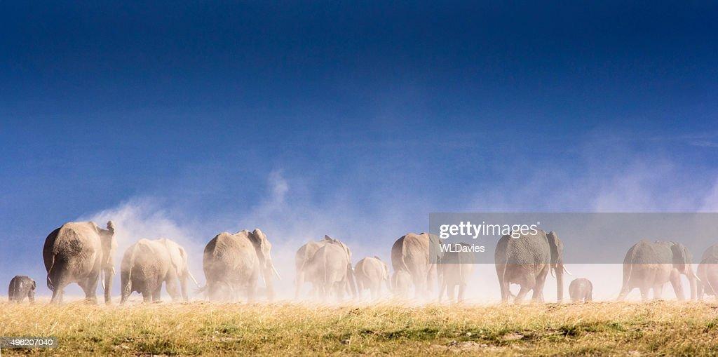 Elephant herd and Kilimanjaro : Stock Photo
