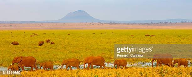 elephant herd at tarangire national park, tanzania africa - tarangire national park stock pictures, royalty-free photos & images