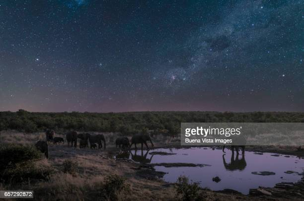 elephant herd drinking at a pool under starry sky - animals in the wild ストックフォトと画像