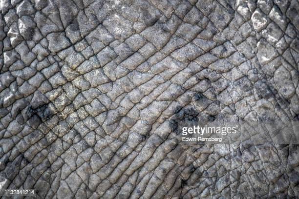 elephant hide - thick stock pictures, royalty-free photos & images