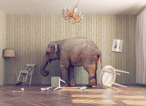 elephant in a room 498141218