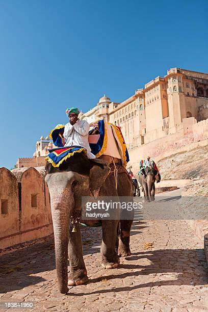 Éléphant dans le Fort d'Amber de Jaipur, en Inde