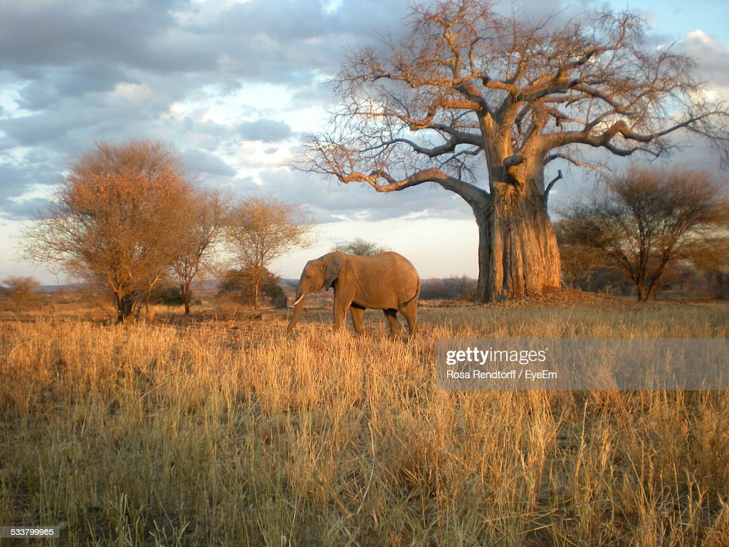 Elephant In Forest : Foto stock