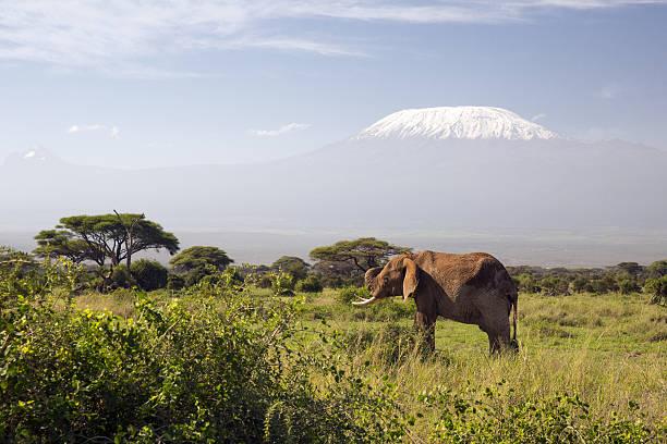 Elephant In Front Of Mount Kilimanjaro, Kenya Wall Art
