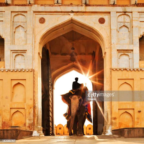 elephant in india - amber fort stock pictures, royalty-free photos & images