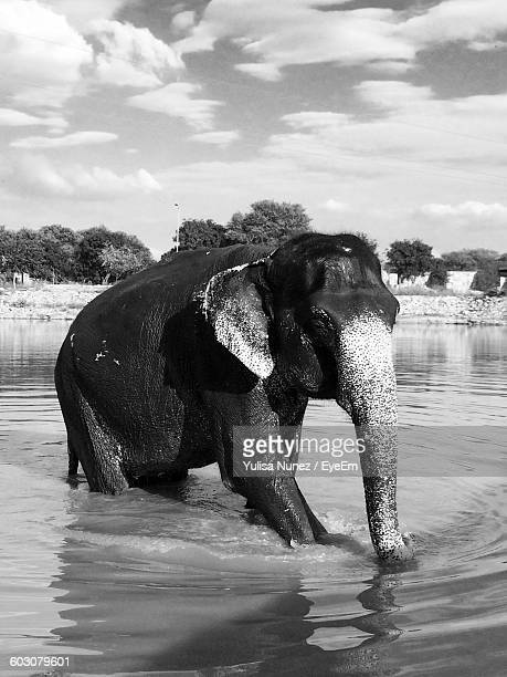 Elephant In Lake Against Cloudy Sky