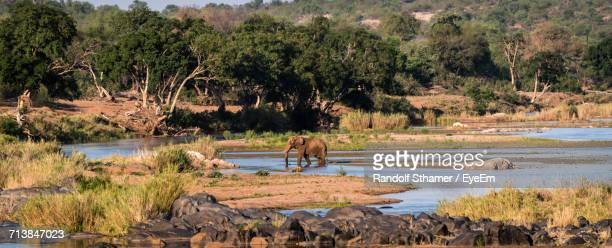 Elephant In Lake At Kruger National Park