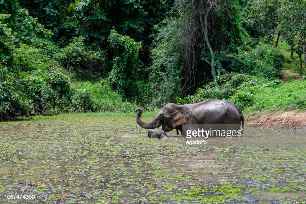 elephant in laos - laos stock pictures, royalty-free photos & images