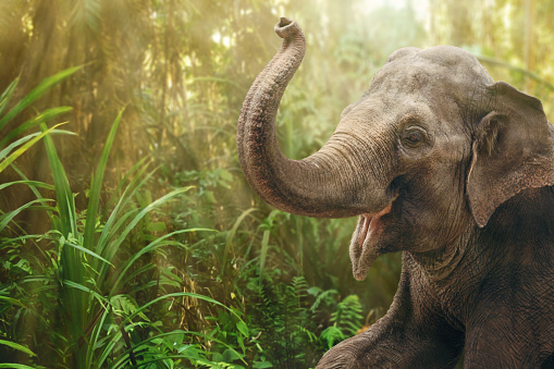 Elephant in rainforest 1164391494