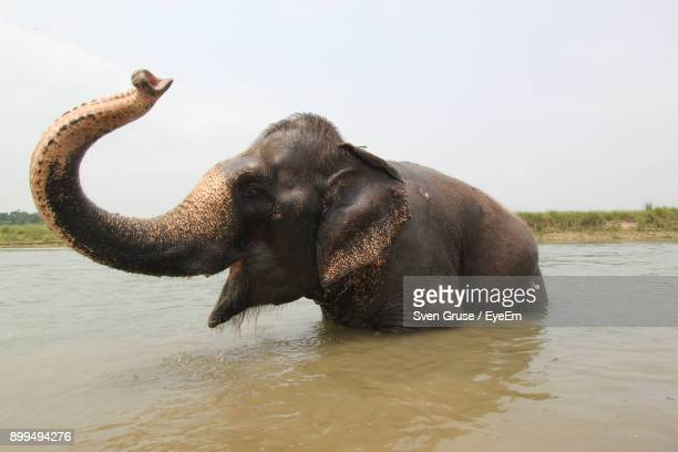 elephant in river - indian elephant stock pictures, royalty-free photos & images