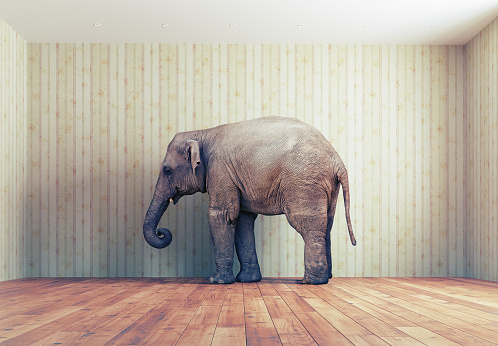 Elephant in the room 498141332