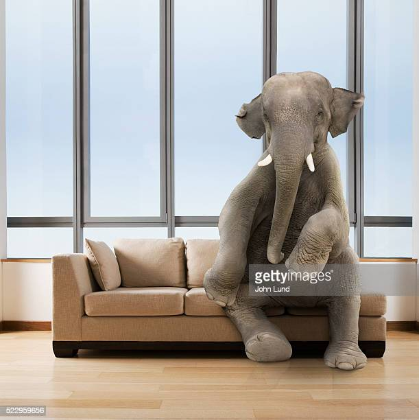 elephant in the room - john lund stock pictures, royalty-free photos & images