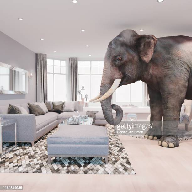 elephant in the room series. - indian elephant stock pictures, royalty-free photos & images