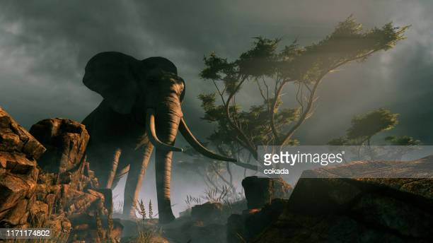 elephant in the wild - mammal stock pictures, royalty-free photos & images
