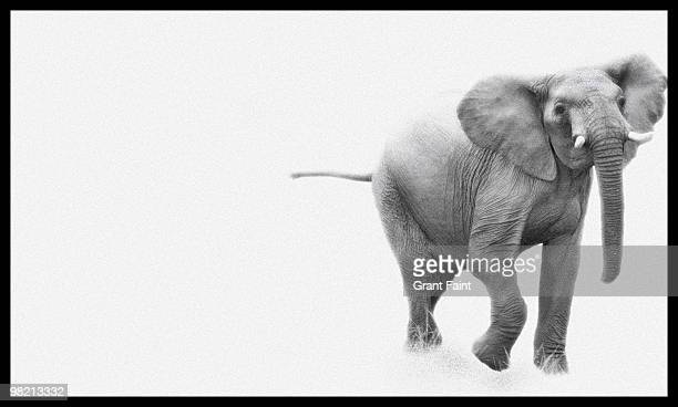 elephant in white box - white elephant stock photos and pictures