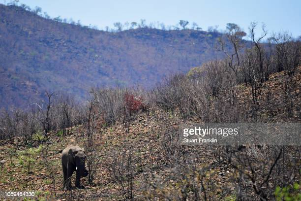 Elephant is pictured during the second round of the Nedbank Golf Challenge at Gary Player CC on November 9 2018 in Sun City South Africa