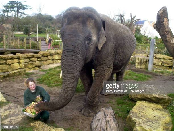 Elephant keeper Donna Murray at Bristol Zoo presented a birthday cake to Wendy the elephant in honour of her 40th birthday The Asian elephant one of...