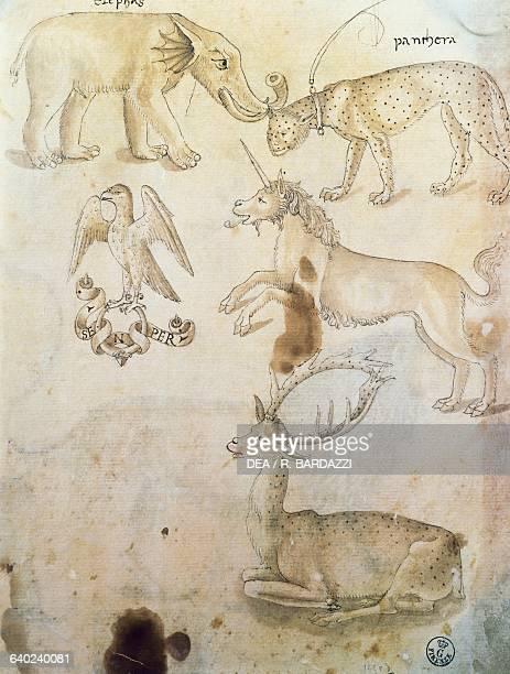 Elephant leopard eagle unicorn and deer study of animals by Leonardo da Vinci drawing Florence Galleria Degli Uffizi Gabinetto Disegni E Stampe Degli...