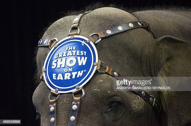 A elephant looks on before a Ringling Bros and Barnum Bailey Circus performance in Washington DC on March 19 2015 Across America through the decades...