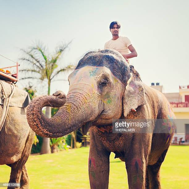 elephant mahout - indian elephant stock pictures, royalty-free photos & images