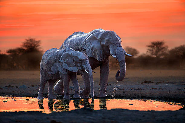 Elephant Mother And Calf At The Waterhole Wall Art