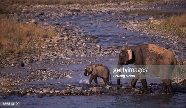 Elephant mother and calf in Corbett