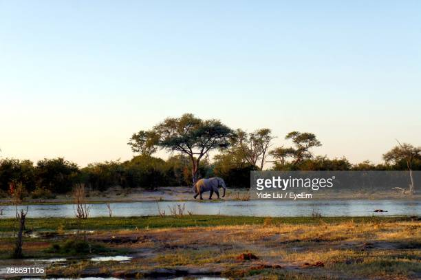 Elephant On Field Against Sky During Sunset