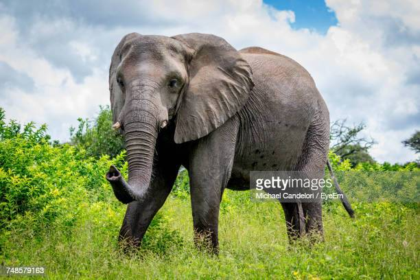 Elephant On Landscape Against Sky
