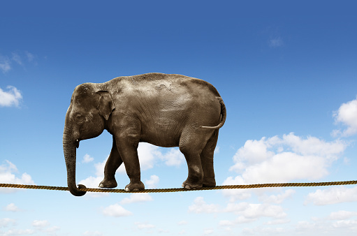 Elephant on tightrope - gettyimageskorea
